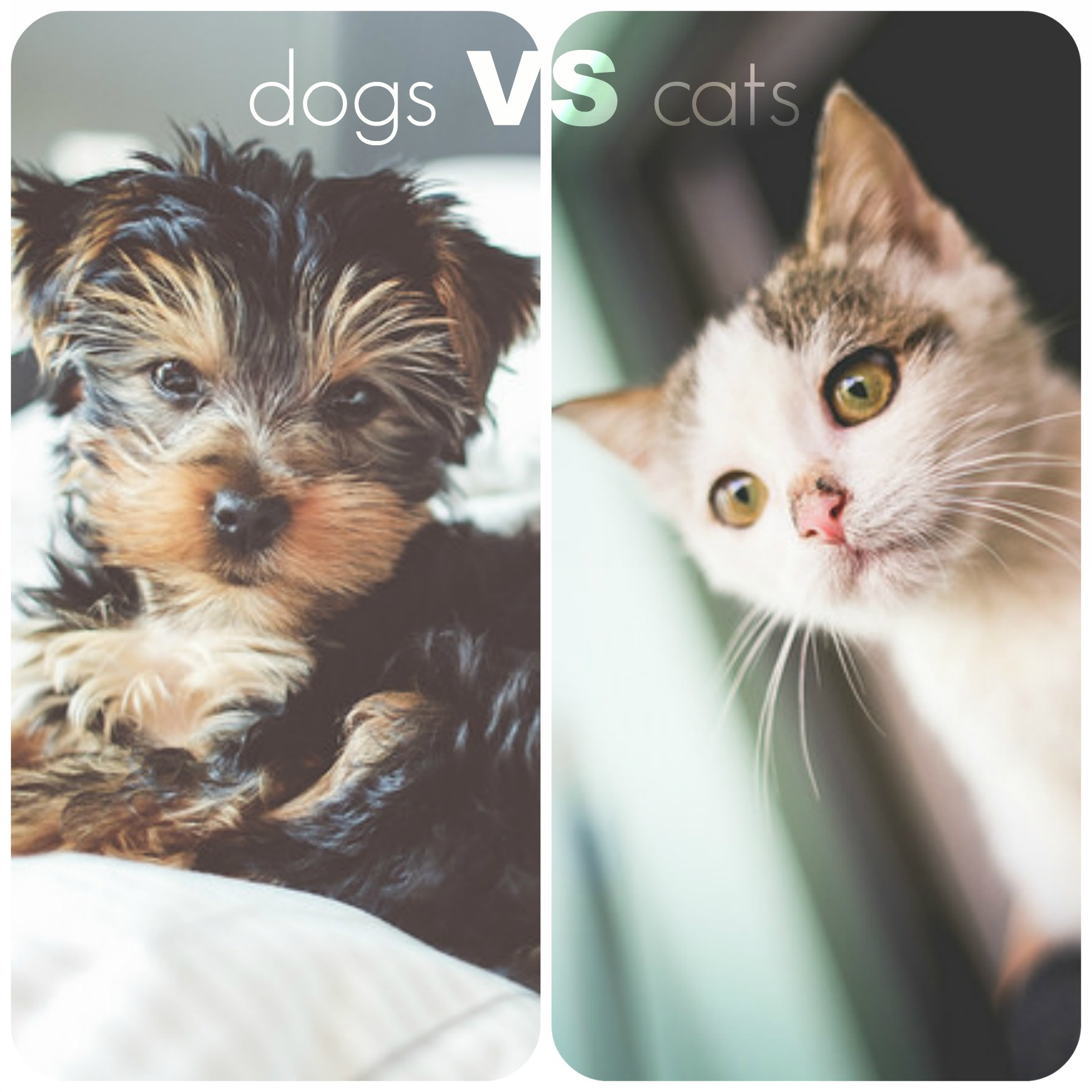 The Arcadia Cats Vs Dogs What S The Best Apartment Pet